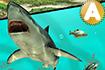 Jeux de requin : Jeu Ace Fishing (Pêche)